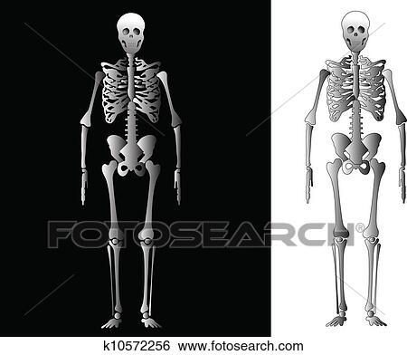 Clip Art Of Human Skeleton K10572256 Search Clipart Illustration