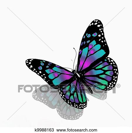 Isol papillon de bleu couleur sur a fond blanc dessin k9988163 fotosearch - Papillon dessin couleur ...