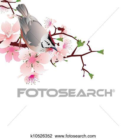 Jailli Oiseau Sur Fleur Cerisier Branche Japon Style Sakura Dessin K10526352 Fotosearch