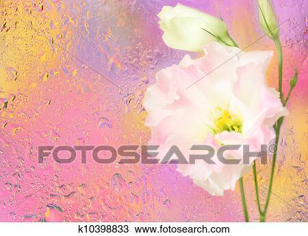 banque de photo eustoma fleur sous mouill verre k10398833 recherchez des images des. Black Bedroom Furniture Sets. Home Design Ideas