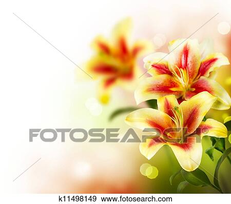 Stock Photograph Of Lily Flowers Border Design Spring Flowers