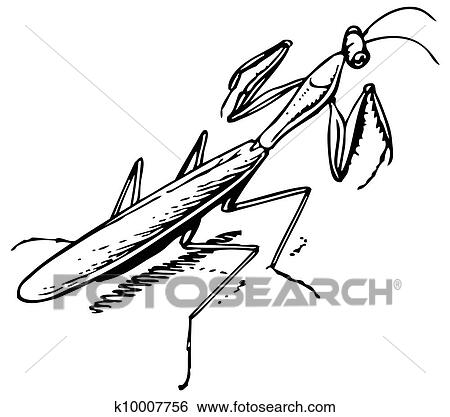 Clip Art Of Mantis K10007756