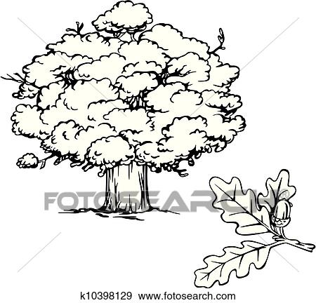 Clip Art Of Oak Tree And Branch With Acorn K10398129