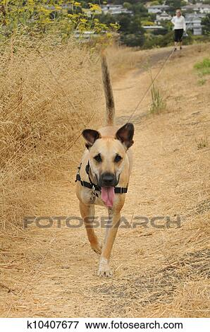 Picture Of Puppy Dog Running On Path Mouth Open K10407677 Search