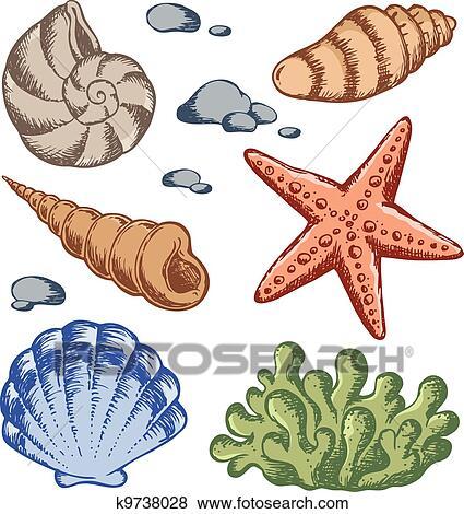 Sea Shells Drawings 1 Clip Art K9738028 Fotosearch