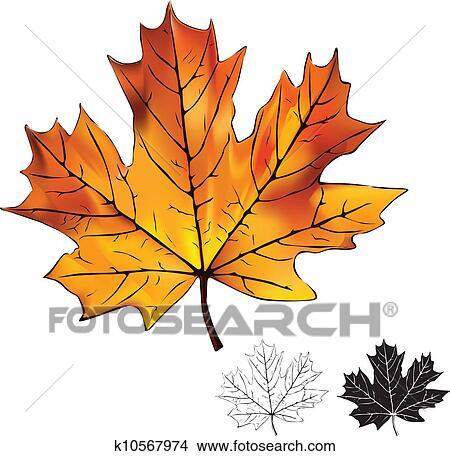 Klipart Sonbahar Kanada Sembolü Yaprak Soyutlanmiş K10567974