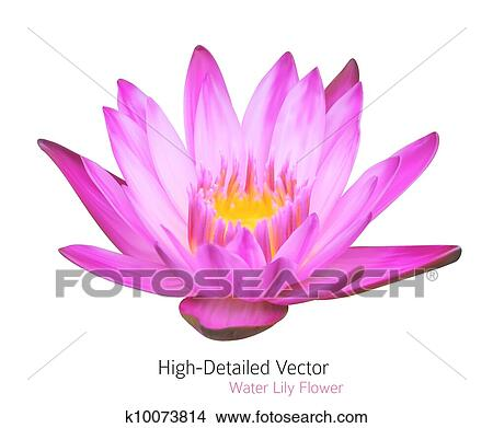 Zen Flower Lotus Vector Water Lily Illustration Beautiful Tropical Plant