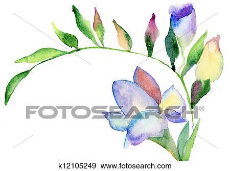 Banque D Illustrations Freesia Fleurs Aquarelle Illustration