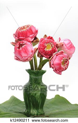 Stock Photography Of Pink Lotus Flower In A Vase On White Background