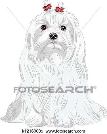 clipart of vector serious white dog maltese breed sitting k12160005 rh fotosearch com clipart maltese cross maltese clipart black and white