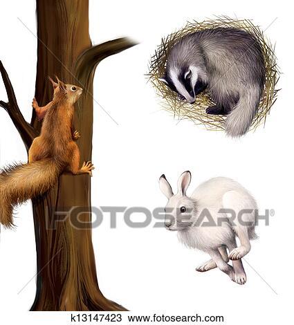 Dessin Ecureuil Sur A Arbre Dormir Blaireau Courant Hare