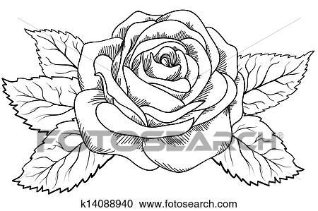 Clipart Beau Rose Dans Les Style De Noir Blanc Engraving
