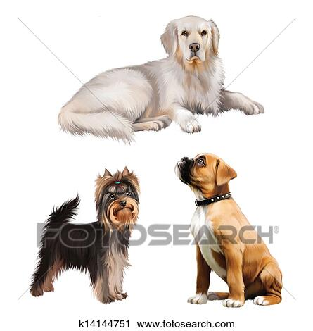 Clipart Of Boxer Puppy Golden Retriever Laying Yorkshire Terrier