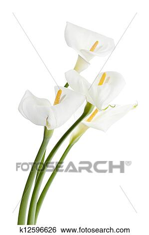 Stock images of bunch of white flowers k12596626 search stock stock image bunch of white flowers fotosearch search stock photography poster photos mightylinksfo