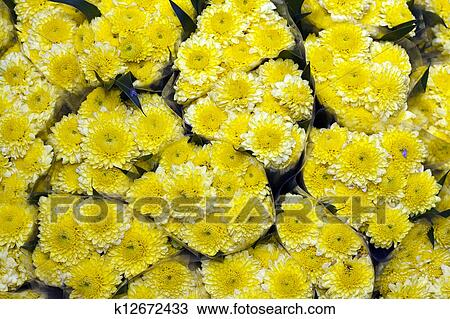 Stock photo of bunches of yellow chrysanthemum flowers flower bunches of yellow chrysanthemum flowers flower market bangkok mightylinksfo