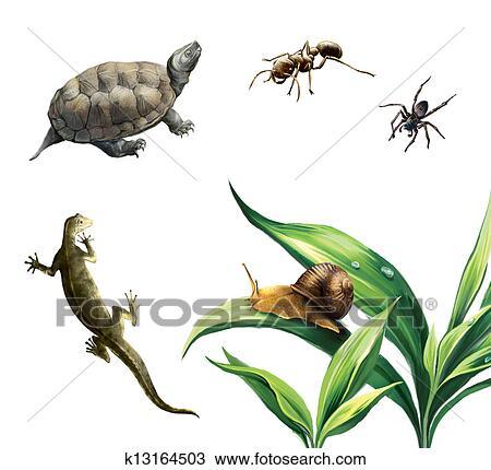 drawing of coahuilan box turtle terrapene coahuila ant spider
