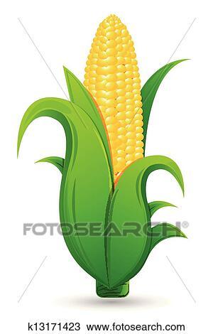 Corn clipart. Free download transparent .PNG   Creazilla