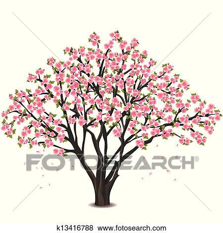 Clipart japonaise cerisier fleur sur blanc k13416788 - Dessin fleur de cerisier ...