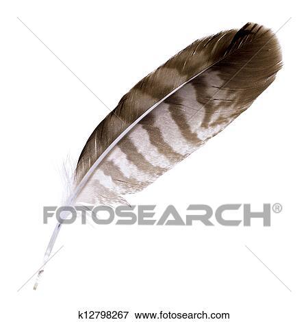 hnedé péro obrázky