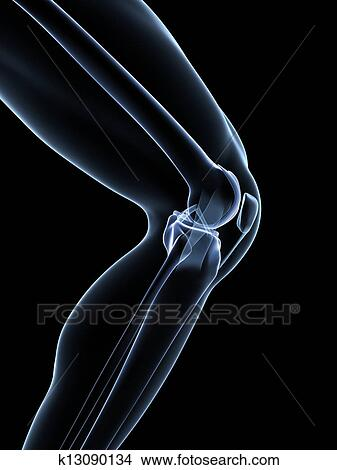 Drawings of knee anatomy k13090134 search clip art illustrations 3d rendered illustration knee anatomy ccuart Choice Image