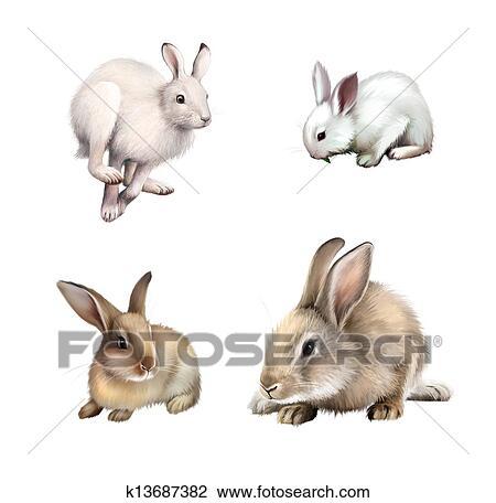 Lapin Blanc Séance Blanc Lièvre Courant Away Gris Rabbit Isolé Blanc Arrière Plan Dessin