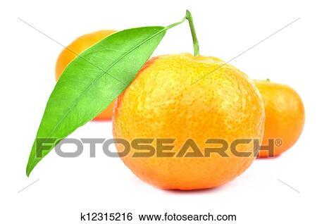 Colección de imágen - mandarina. Fotosearch - Buscar fotos e imágenes y  fotos Clip Art a6c5dbc7f331