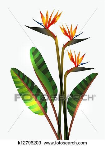 Clipart Oiseau Paradis Fleur Et Tige K12796203 Recherchez Des