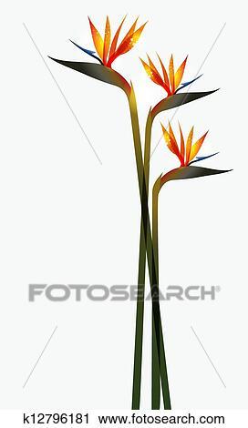 Clipart Oiseau Paradis Fleur Isole K12796181 Recherchez Des