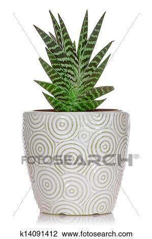 Plante Maison Dans A Pot Céramique Dessin