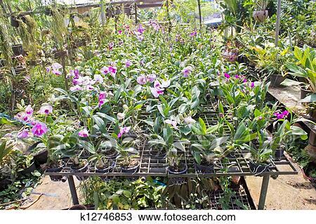 dessin plante maison verte jardin orchid e fleur cr che k12746853 recherchez des. Black Bedroom Furniture Sets. Home Design Ideas