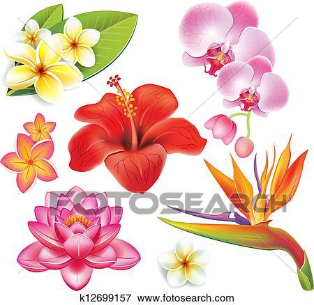 Fiori Hawaiani Disegni.Set Di Fiori Tropicali Clip Art K12699157 Fotosearch