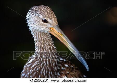 stock fotografie vogel mit langer schnabel oder banknote