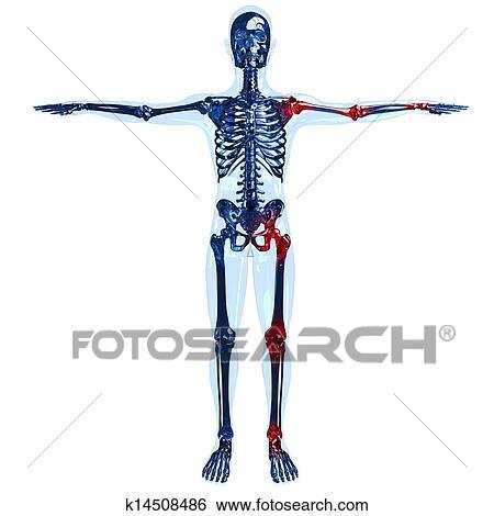 Stock Illustration - voll, menschliches skelett, 3d, begriff, mit ...