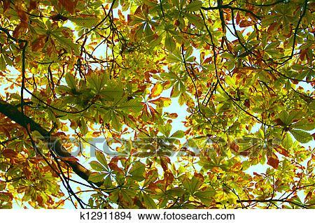 foto de Vue, de, feuilles, tourner, jaune, dans, automne, depuis, au ...
