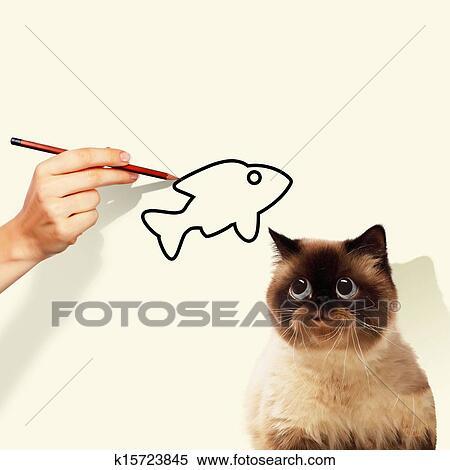 シャム 猫 イラスト K15723845 Fotosearch