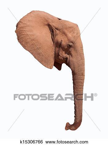 Colección de imágenes - cabeza elefante, oreja, y, tronco k15306766 ...