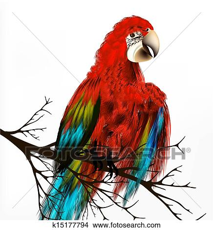 Dessins Colore Vecteur Realiste Oiseau Tropical Asseoir A