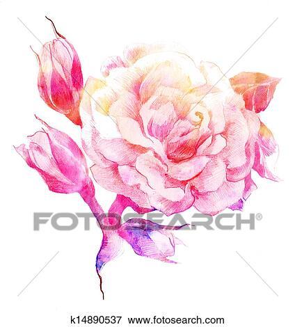 Banque D Illustrations Fleur Couleur Rose Croquis K14890537