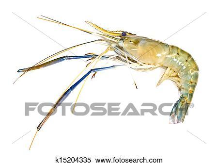 Giant freshwater prawn on white background Stock Photography