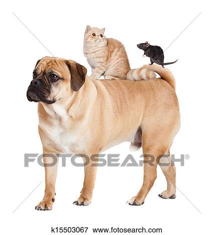 Hund Katt Och Mus Isolerat Stockfoto