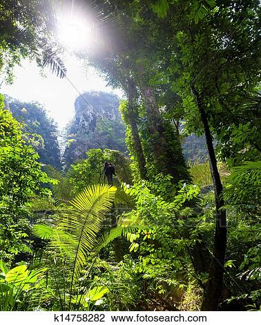 Jungle Tropical Forest Beautiful Landscape Background Stock Image