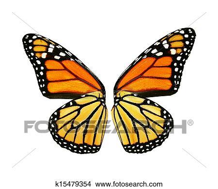 Aile De Papillon Dessin dessins - orange, ailes, de, papillon k15479354 - recherche de clip