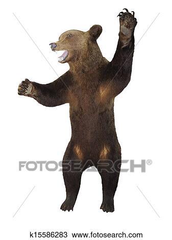 Ringhiare arrabbiato orso marrone isolato sopra bianco