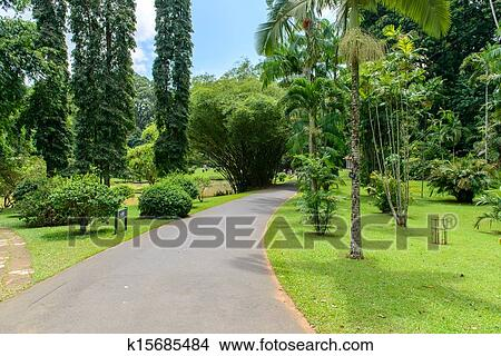 Stock Photo Of Sri Lanka Royal Botanic Gardens Different Types Of