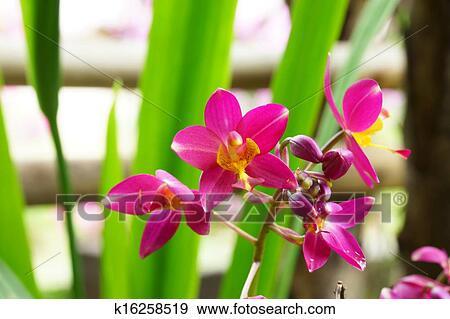 Stock Fotograf Boden Orchidee Blumen In Dass Tropischer