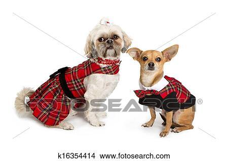 Chihuahua E Shihtzu Vestido Para Natal Foto K16354414