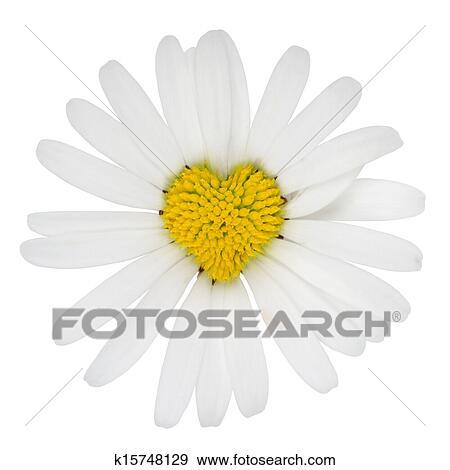 Banque De Photographies Forme Coeur Marguerite Fleur Amour