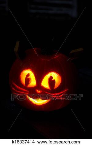 Zucca Halloween Gatto.Gatto Kitty Halloween Zucca Immagine