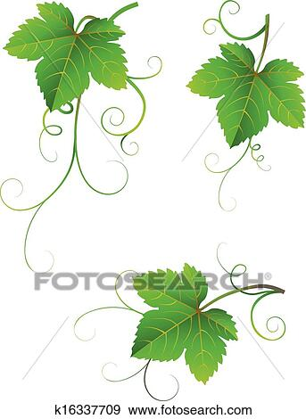 Grape Leaves Clip Art K16337709 Fotosearch