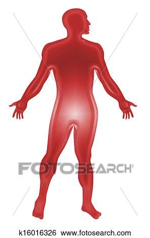 Stock Illustration Of Male Human Anatomy Outline Red K16016326